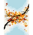Maple branches vector image vector image