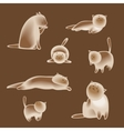 Set of siamese cats vector image vector image