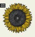 sunflower hand drawn can be vector image vector image
