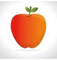 Orange fruit icon graphi vector image