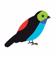 paradise tanager bird vector image vector image