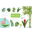 realistic tropical plants collection vector image vector image