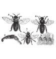 Bee vintage engraving vector | Price: 1 Credit (USD $1)