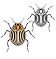 Beetle Colorado vector image