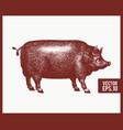 black pig silhouette retro vector image