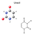Chemical structural formula and model of uracil vector image vector image