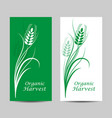 set vertical banners wheat spikelet on white vector image