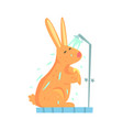 cute cartoon bunny rubbing himself a foam sponge vector image vector image