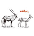 african wild antelope deer or doe orix gemsbok vector image vector image