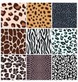 animal skin seamless pattern vector image vector image