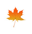 autumn maple leaf vector image