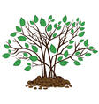 bush with leaves in soil vector image vector image