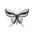 high detailed paradise birdwing butterfly from vector image