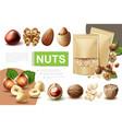 realistic healthy nuts composition vector image vector image