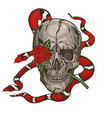 skull with a milk snake and a rose graphics vector image
