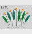 strelitzia reginae flower vector image vector image