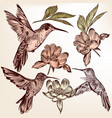 collection of hand drawn hummingbirds vector image