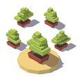 isometric bonsai in a pot plant vector image
