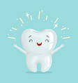 cute healthy shiny cartoon tooth character vector image vector image