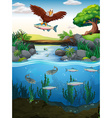 Eagle catching fish in the river vector image vector image
