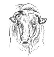 head powerful bull hand drawing vector image