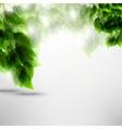Beautiful green leaves vector image