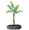 a palm tree on white background vector image vector image