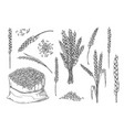 sketch wheat set isolated on white background vector image