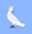 cockatoo icon cute cartoon wild animal symbol vector image