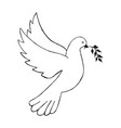 Dove with olive branch hand draw