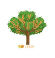 peach garden fruit tree with name vector image vector image