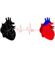two human hearts vector image