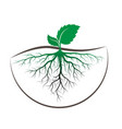 sprout tree with root vector image
