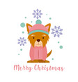 dog merry christmas card vector image