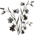 flower of campanula vector image vector image