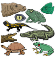 reptiles vector image vector image