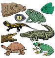 reptiles vector image vector image
