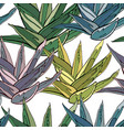 Seamless pattern with traditional homeplant agave vector image