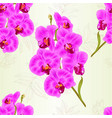 seamless texture branch purple orchids vector image vector image
