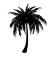 Silhouette of palm vector image vector image