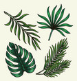green tropical leaves composition vector image