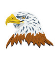 portrait a bald eagle isolated on white vector image vector image