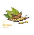 soybean hand drawn set vector image