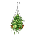 a hanging pot with green plant