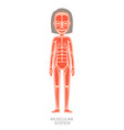 muscular system human body vector image