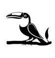 black toucan bird sign vector image vector image