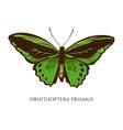 set hand drawn colored ornithoptera vector image vector image