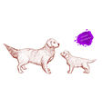 Dog Golden Retriever on a white background with th vector image vector image