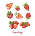 fresh berries hand drawn vector image
