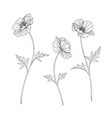 hand drawn poppy floral vector image vector image